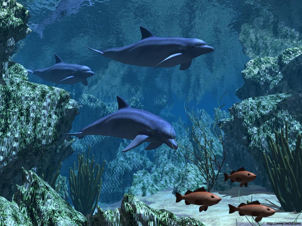 wallpaper dauphin animaux fond d 39 cran. Black Bedroom Furniture Sets. Home Design Ideas