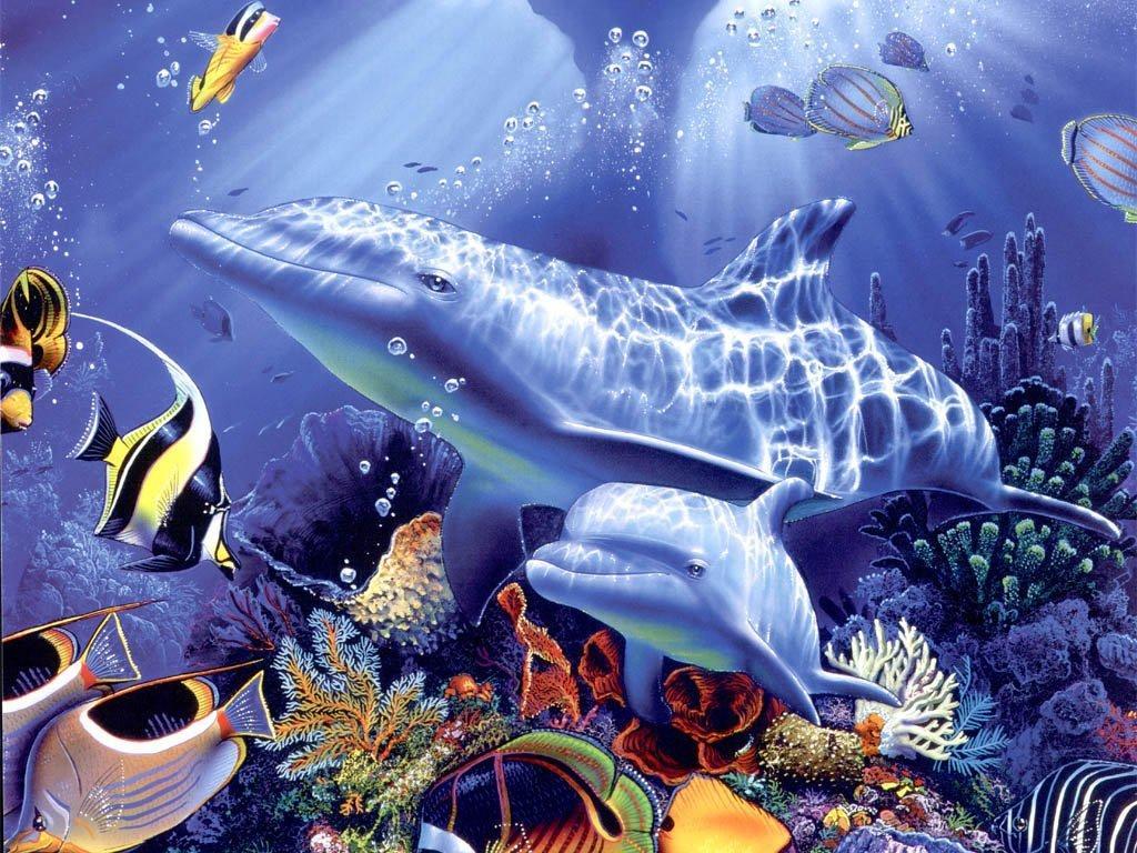 Wallpaper dauphin animaux fond d 39 cran for Sfondi stupendi hd