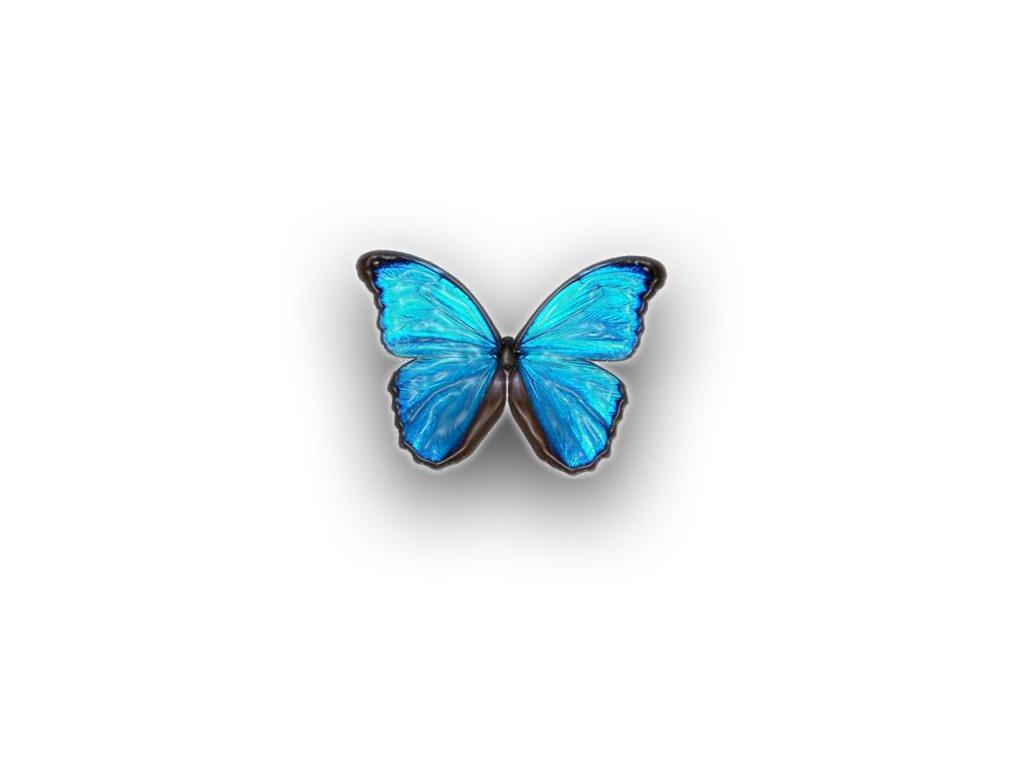 Souvent wallpaper : Papillon Animaux fond d'écran CP81