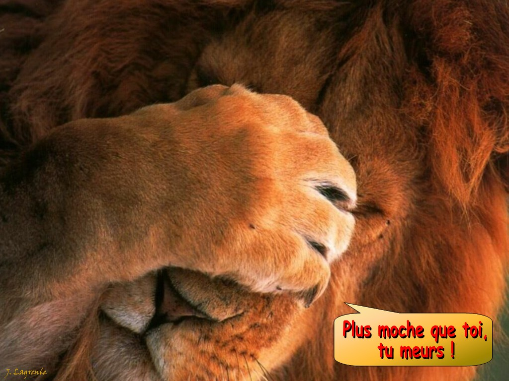 Wallpaper animaux humour fond d 39 cran - Wallpaper animaux ...