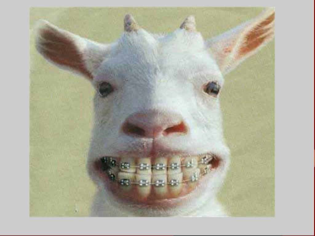 Wallpaper animaux humour fond d 39 cran - Animaux wallpaper ...