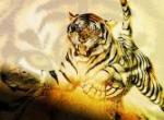 Tigres N°11679 wallpaper provenant de Tigres