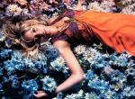Shakira N°11921 wallpaper provenant de Shakira