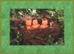 Bebes wallpaper de riu provenant de Bebes