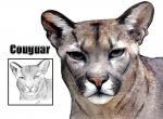 Cougar N°5006 wallpaper provenant de Cougar